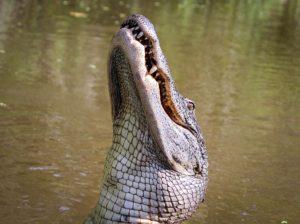 Help! A gator ate my data!